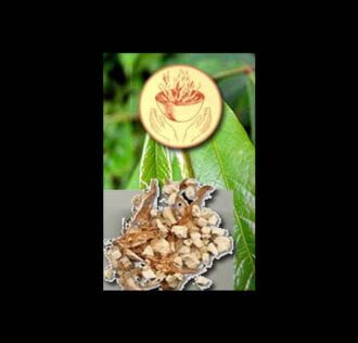 OXUMARE SEEDS - 2 PC PACK
