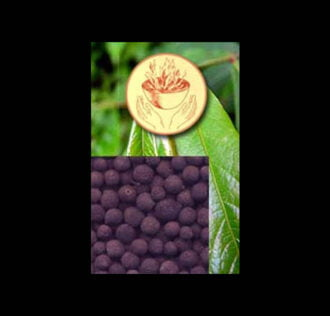 LELECUM SEEDS - GR 3,7 PACK APPROX