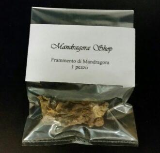 FRAMMENTO DI MANDRAGORA