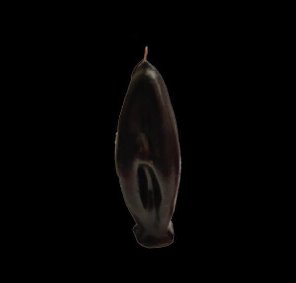 VAGINA CM 10 Color nero